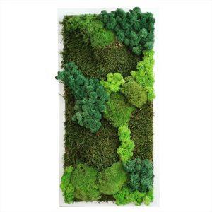 Tablou cu mix de muschi si licheni stabilizați – ballmoss, platmoss, raindeermoss